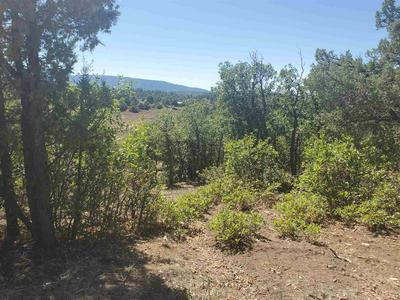 TRACT 123 & 124 UNIT 6, Chama, NM 87520 - Photo 2
