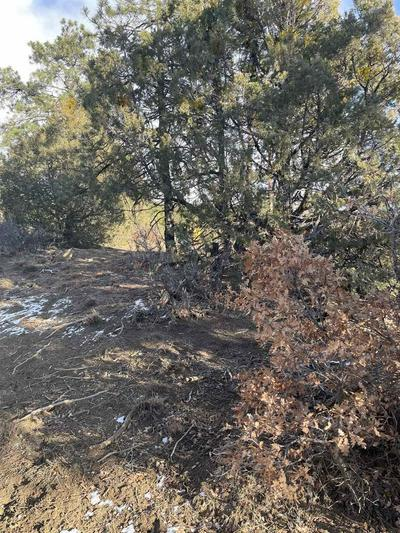 TRACT 68 PRIVATE RD 1781, Chama, NM 87520 - Photo 2