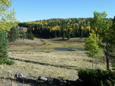 TBD FOREST SERVICE ROAD 91, Taos, NM 87581 - Photo 1