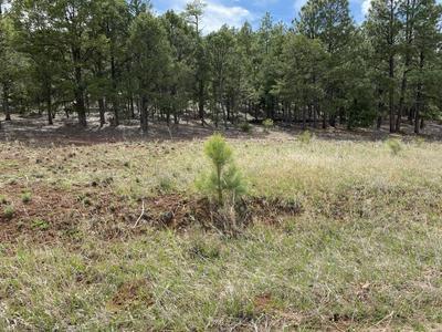 3 COLIBRI CT, Pecos, NM 87552 - Photo 1