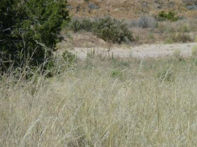 TRACT C LOT 4 OF FNRT, LOS LUCEROS, NM 87582 - Photo 2
