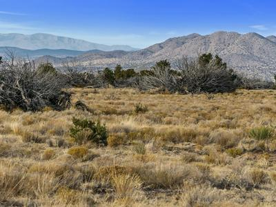 APACHE PLUME RANCH, Cerrillos, NM 87010 - Photo 2