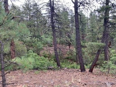 TBD UNIT 6 LOT 1 PONDEROSA, Chama, NM 87520 - Photo 1