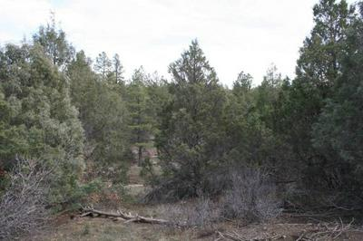 UNIT 1 TRACT 29 PONDEROSA, Chama, NM 87520 - Photo 2