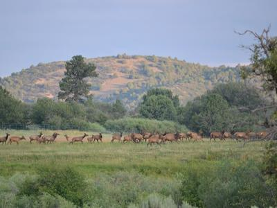 CHAMA RIVER RANCH, CHAMA, NM 87520 - Photo 1