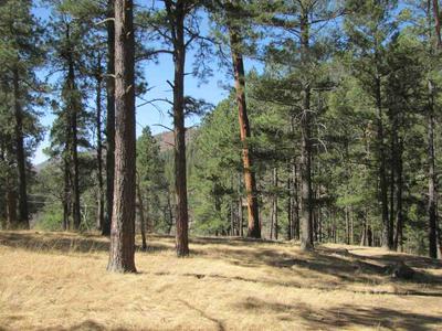 2100 NM HIGHWAY 63, Terrero, NM 87573 - Photo 2