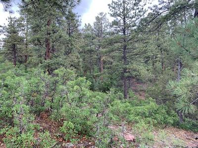 TBD UNIT 6 LOT 1 PONDEROSA, Chama, NM 87520 - Photo 2