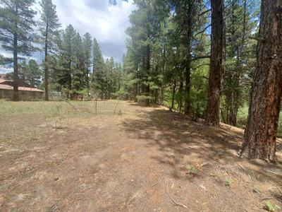 0 NORTH PINE, Chama, NM 87520 - Photo 2