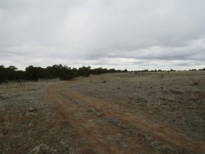 368B NM 34, Pecos, NM 87562 - Photo 2
