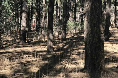 LOT 14 PENDARIES, Rociada, NM 87742 - Photo 2