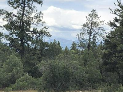 TBD BUCKMAN ROAD, Chama, NM 87520 - Photo 1