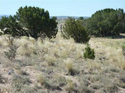 TRACT C C-1-A-1-A OF COTTONWOOD, LOS LUCEROS, NM 87582 - Photo 2