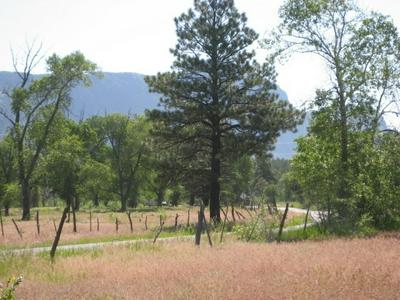 WEST TRACT COTTONWOOD TRACTS, Chama, NM 87520 - Photo 1