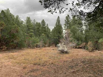 8 PINON RIDGE RD, Pecos, NM 87552 - Photo 1