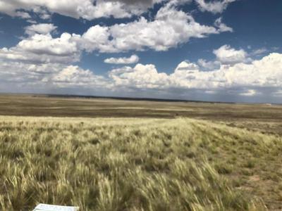 TBD PALOMINO DRIVE, Moriarty, NM 87035 - Photo 1