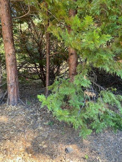 23 WHISPERING CREEK CT, Shingletown, CA 96088 - Photo 2