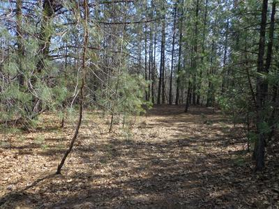 3.31 ACRES OPOSSUM RD, Lakehead, CA 96051 - Photo 2