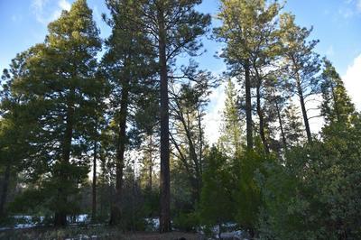 139.66 ACRES WHITMORE RD, Whitmore, CA 96096 - Photo 2