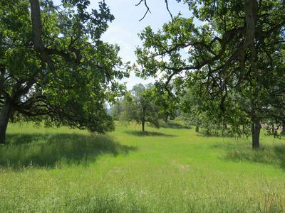 #21 LINMAN RD., Manton, CA 96059 - Photo 2