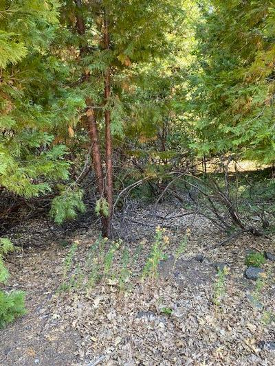 23 WHISPERING CREEK CT, Shingletown, CA 96088 - Photo 1