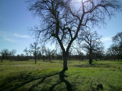 HILDA, Shingletown, CA 96088 - Photo 2