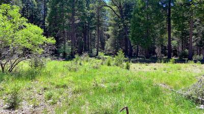 5 +- ACRES BECKWITH CREEK LN, Shingletown, CA 96088 - Photo 1