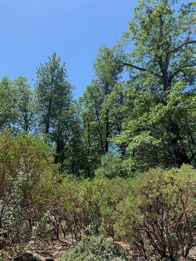 000 LAZY MOUNTAIN WAY, Shingletown, CA 96088 - Photo 2