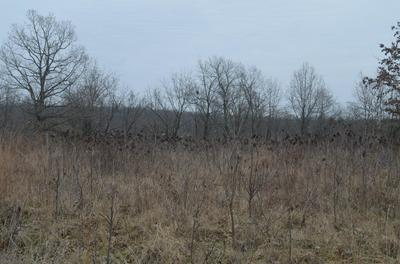 LOT 13 LOOKOUT POINT, Bruner, MO 65620 - Photo 2