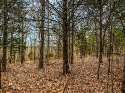 000 COUNTY ROAD 829, Gainesville, MO 65655 - Photo 2