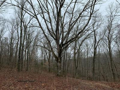LOT 7 BUCKSKIN RIDGE, Highlandville, MO 65669 - Photo 2