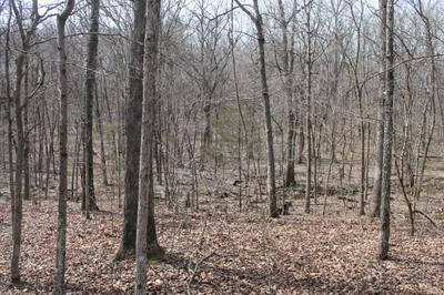 000 COUNTY ROAD PRIVATE ROAD N-337, AVA, MO 65608 - Photo 2