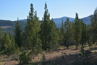 DRY CREEK ROAD, Prineville, OR 97754 - Photo 2
