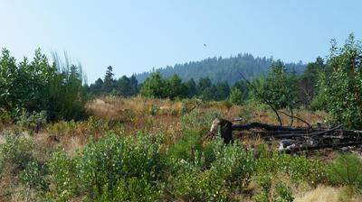 COYOTE CREEK TL601 ROAD, Wolf Creek, OR 97497 - Photo 2