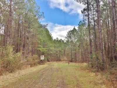000 BUNKLEY RD, Meadville, MS 39653 - Photo 1