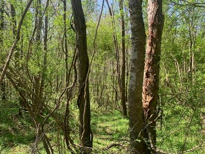 . WEST OF HWY 553, Fayette, MS 39069 - Photo 1