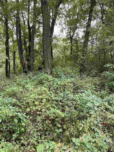 LOT N SHORE RD, Lake Mills, WI 53551 - Photo 2