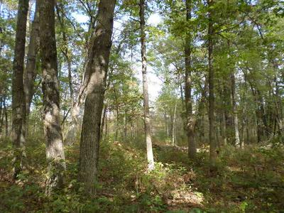 0 COUNTY ROAD HH, Warrens, WI 54666 - Photo 2