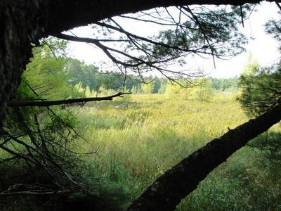 L59 EMDEN LAKE RD, RHINELANDER, WI 54501 - Photo 2