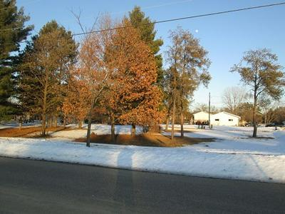 210 N LINDEN ST, Adams, WI 53910 - Photo 1
