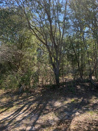 000 WILKIE MOSLEY RD, Blakely, GA 39823 - Photo 2