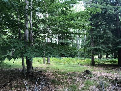 LOT #25 GREENSVIEW DRIVE, Free Soil, MI 49411 - Photo 2