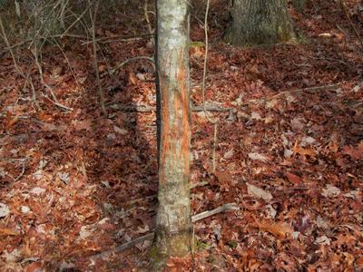 TBD TALL TREE LANE 52.43 AC, Austinville, VA 24312 - Photo 2