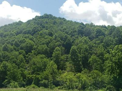 TBD CAVITTS CREEK ROAD, North Tazewell, VA 24630 - Photo 1