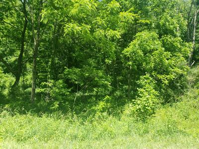 TBD WHITLEY BRANCH ROAD, North Tazewell, VA 24630 - Photo 2