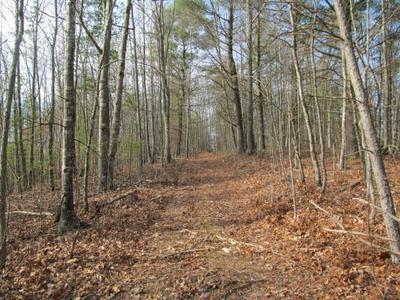 TBD TALL TREE LANE 52.43 AC, Austinville, VA 24312 - Photo 1