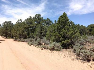 PETACA RD, Carson, NM 87517 - Photo 2