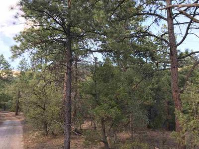 TRACT A2 TURKEY SPRINGS ROAD, Valdez, NM 87580 - Photo 2