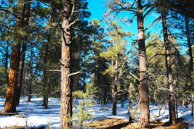 TRACT F TURKEY SPRINGS RD, Valdez, NM 87580 - Photo 1