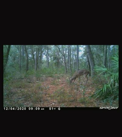 VACANT S HIGHWAY 19, PERRY, FL 32348 - Photo 2