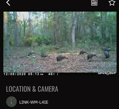 VACANT S HIGHWAY 19, PERRY, FL 32348 - Photo 1